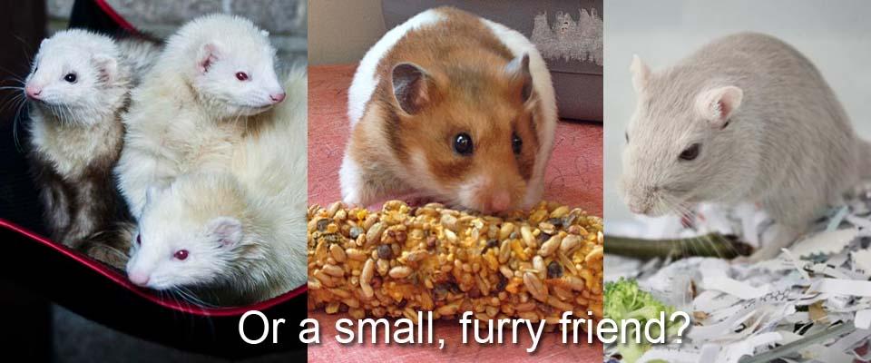 small-animal